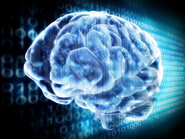 wpid-human-brain-2014-02-4-21-211.png
